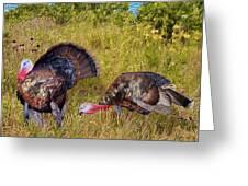 Turkey Terrain Greeting Card