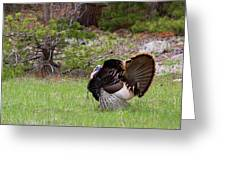 Turkey Trot Greeting Card