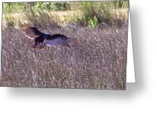 Turkey Vulture 2 Greeting Card