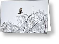 Turkey Vulture In The Snow Greeting Card