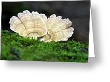 Turkeytail Fungus (trametes Versicolor) Greeting Card
