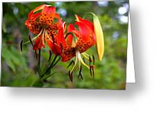 Turkish Cap Lily  Greeting Card