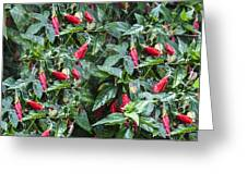 Turks Cap And Rain Drops Greeting Card