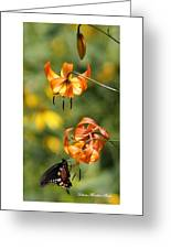Turks Cap Lilies And Butterfly Greeting Card