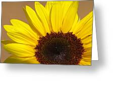Turmeric Aster Greeting Card