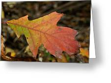 Turn A Leaf Greeting Card
