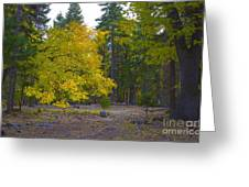 Turning For Autumn Greeting Card