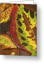 Turning Leaves 3 Greeting Card