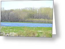 Turquoise Marsh Greeting Card