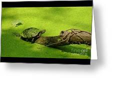 Turtle-190 Greeting Card
