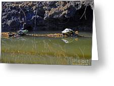Turtle And Frog On A Log Greeting Card