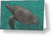 Turtle Ascending Greeting Card