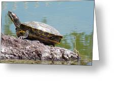 Turtle At The Lake Greeting Card