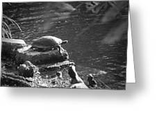 Turtle Bw Greeting Card by Nelson Watkins