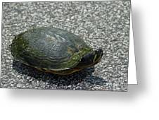 Turtle Crossing Greeting Card