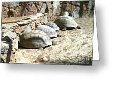 Turtle Desert Greeting Card