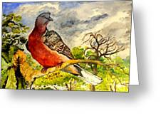 Turtle - Dove Greeting Card