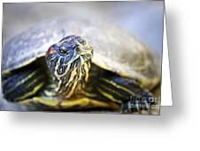 Turtle Greeting Card