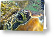 Turtle Eye Greeting Card