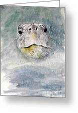 Turtle Face Greeting Card