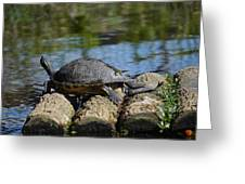 Turtle Float Greeting Card