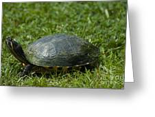 Turtle Grass Greeting Card