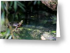Turtle Grotto Greeting Card