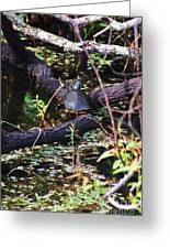 Turtle In The Glades Greeting Card