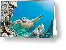 Turtle In Tropical Ocean Greeting Card
