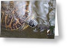 Turtle Kiss Greeting Card by Julie Cameron