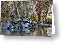 Turtle Landing Greeting Card