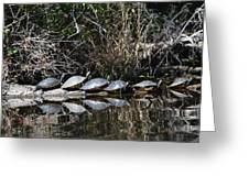 Turtle Lineup Greeting Card