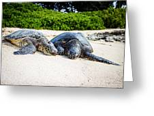 Turtle Lovin Greeting Card