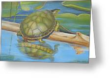 Turtle On A Log Greeting Card