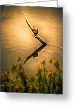 Turtle On Golden Pond Greeting Card