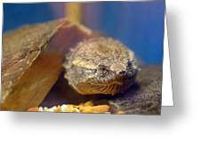 Turtle Portrait Greeting Card