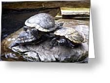 Turtle Rant Greeting Card