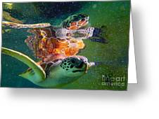 Turtle Reflection Greeting Card