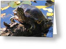 Turtle Smile Greeting Card
