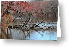Turtle Tree Greeting Card