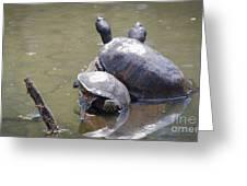 Turtle Trio Greeting Card