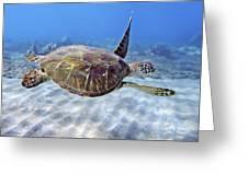 Turtle Underwater 3 Greeting Card