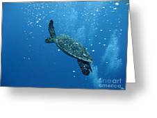 Turtle With Divers' Bubbles Greeting Card by Alan Clifford