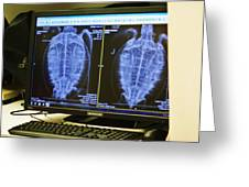 Turtle X-ray Greeting Card