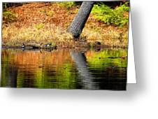 Turtles At The Edge Greeting Card