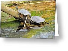 Turtles At The National Zoo Greeting Card