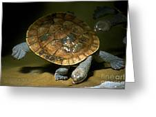 Turtles Float Greeting Card