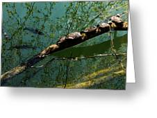 Seven Turtles In The Sun Greeting Card