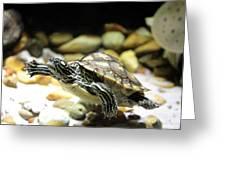 Turtles In The Water Greeting Card