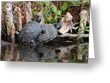 Turtles  Greeting Card by Julie Cameron